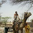 Sobre el camello